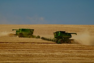Harvesting Wheat on the Day Trust